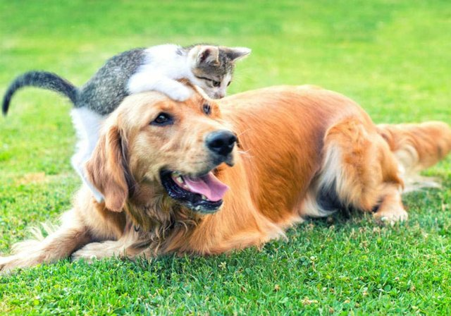 cat_dog_hero.jpg