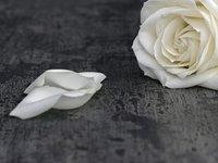 white rose black and white.jpg
