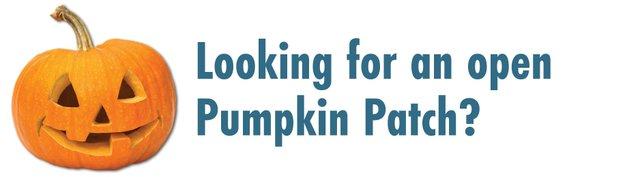 Open Pumpkin Patches