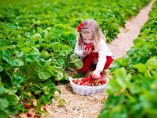 girl in strawberry field.jpg