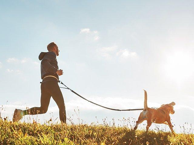 man walking dog panorama.jpg